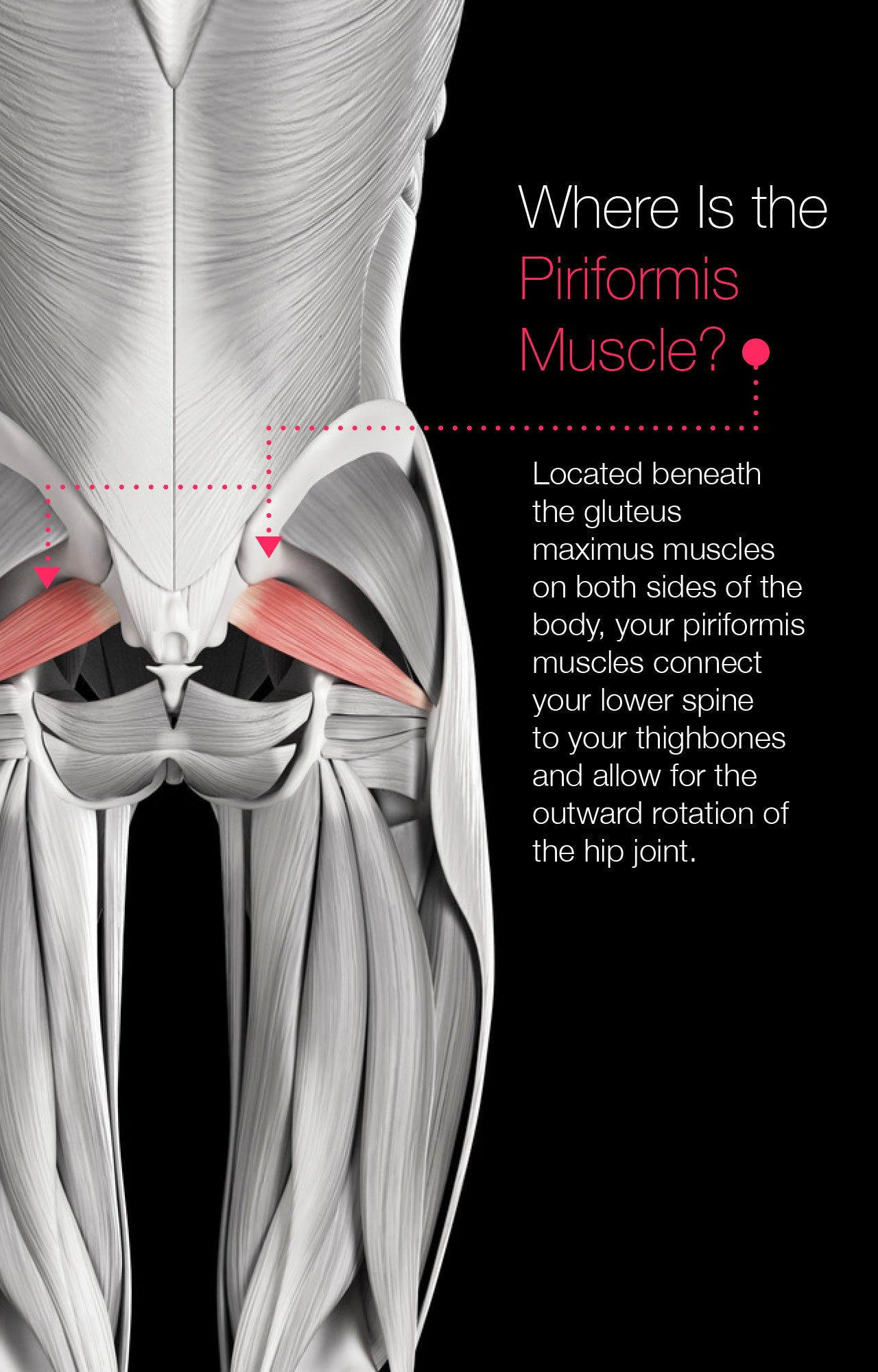 Where Is the Piriformis Muscle?