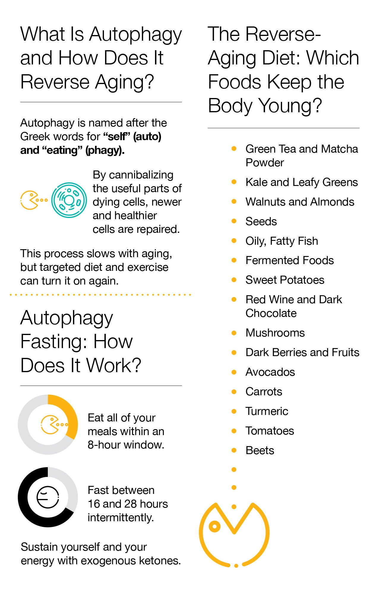 What Is Autophagy and How Does It Reverse Aging