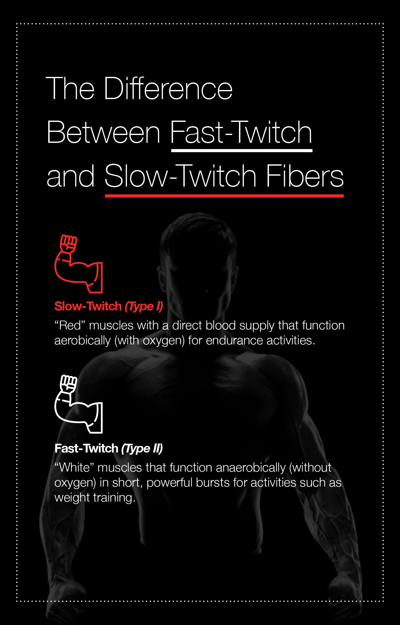 The Difference Between Fast-Twitch and Slow-Twitch Fibers