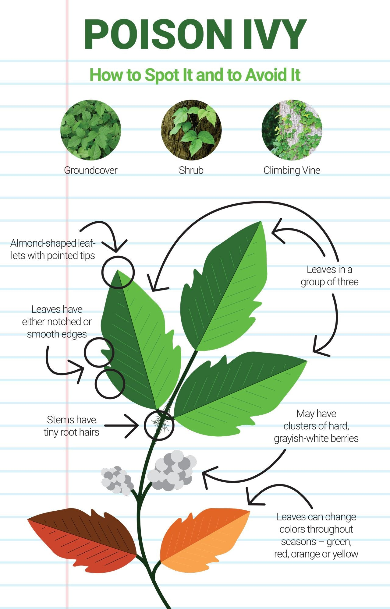 how to spot and treat poison ivy
