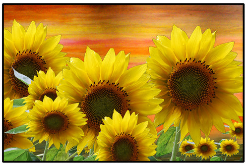 Sunflowers garden - Maremade Designs