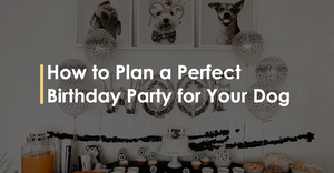 How to Plan a Perfect Birthday Party for Your Dog
