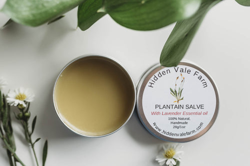 100% Natural, Plantain Salve, Handmade with Beeswax, helpful for Bug Bites - Hidden Vale Farm