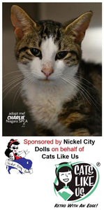 CLU Joins with Nickel City Dolls to sponsor a Cage At SPCA!