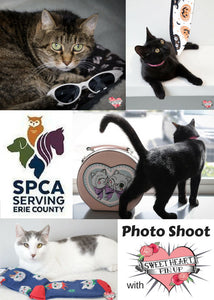 Kitties Kitties Everywhere - SPCA Photoshoot with Sweet Heart Pin Up