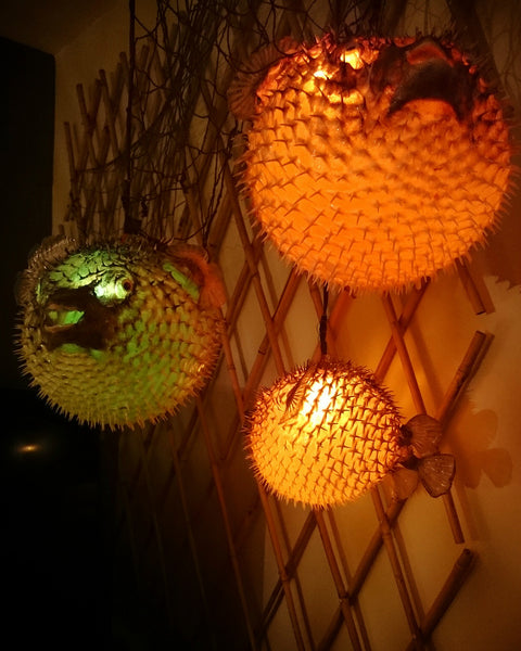 Puffer fish lights The Lime Lounge