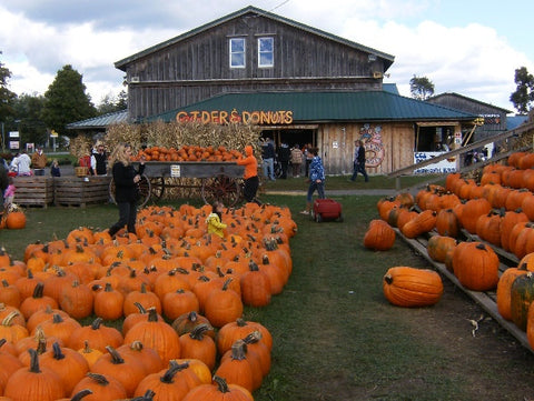 The Great Pumpkin Farm New York