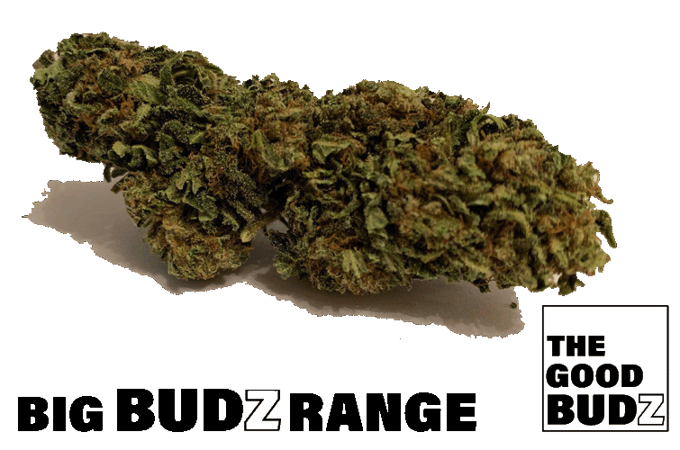 "Gorilla Glue ""CBD WEED"" *NEW* - The Good Budz"