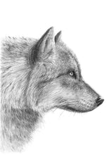 Load image into Gallery viewer, Gray wolf - Close up