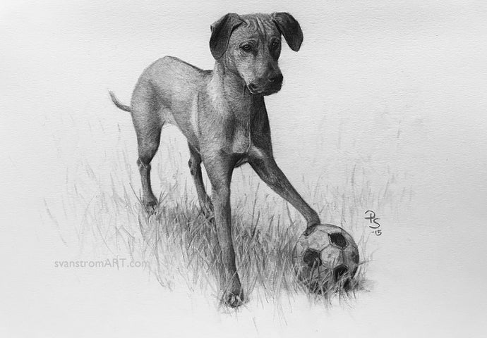 Commission - Dog portrait - Playful - 2015