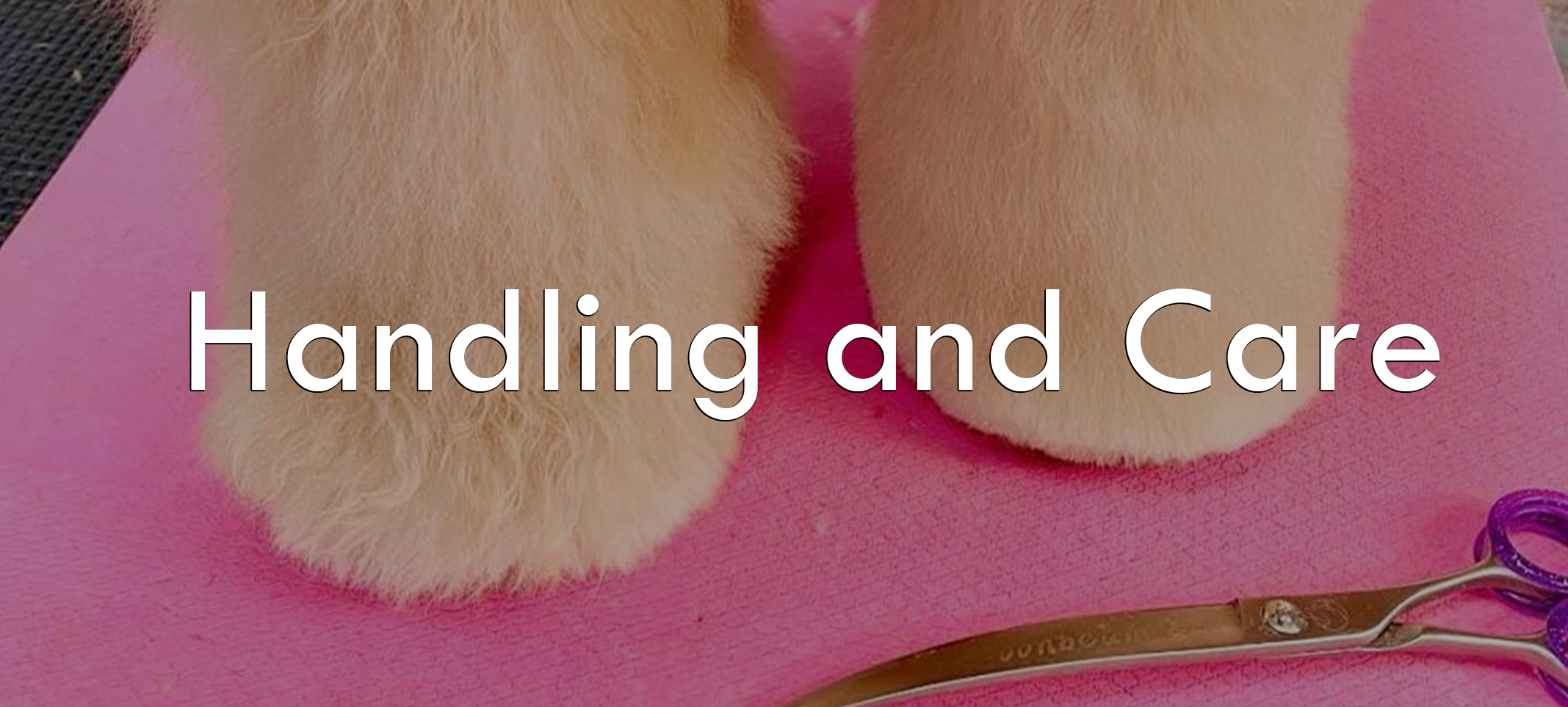 Handling and Caring for Your PawMat