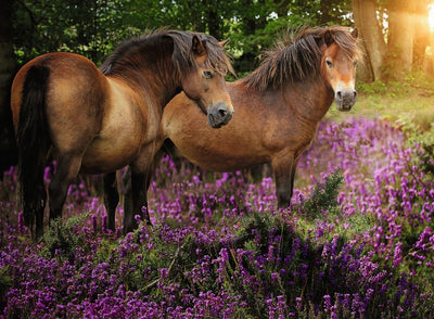 Ponies in the Flowers 500pc Puzzle - Ravensburger