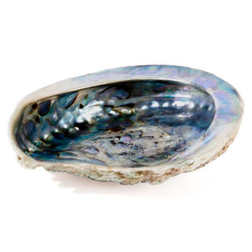 Paua Incense Shell - Small