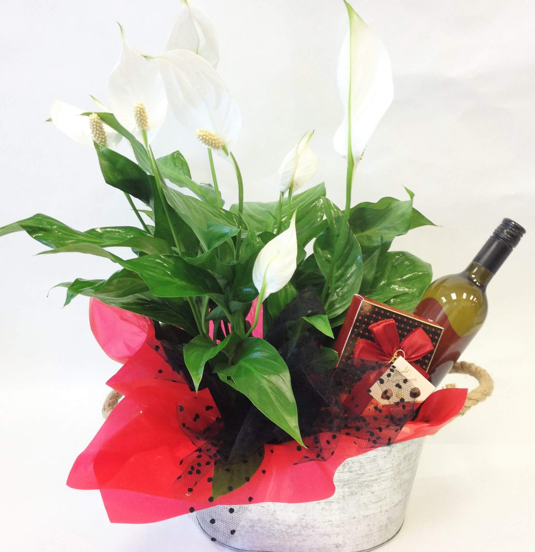 Plant in container with wine and chocolates, lillies, Anniversary, gift basket,