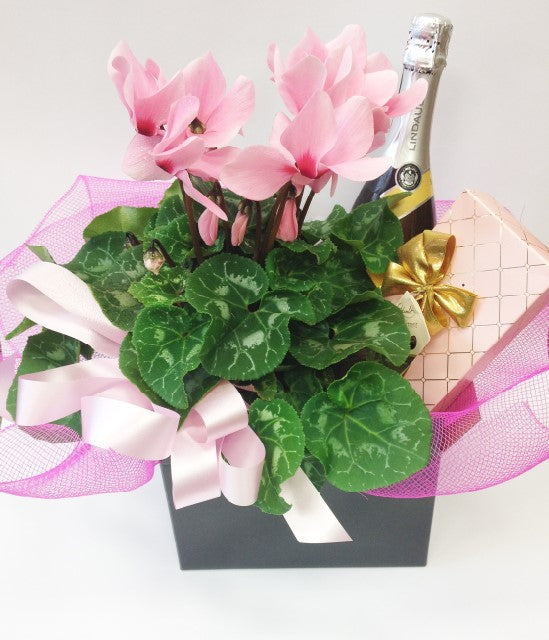 Boxed plant with bubbles & chocolates