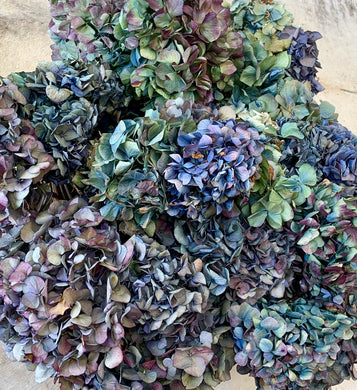 Dried and Glycerined Hydrangea