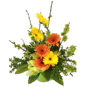 Pail of gerberas, get well, hospital, Retirement, Birthday, Anniversary, Arrangements,