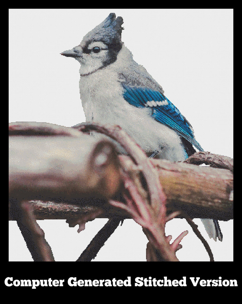 Blue Jay computer generated stitched version