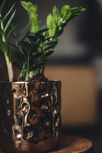 melbourne indoor plant delivery gifts free shipping same day
