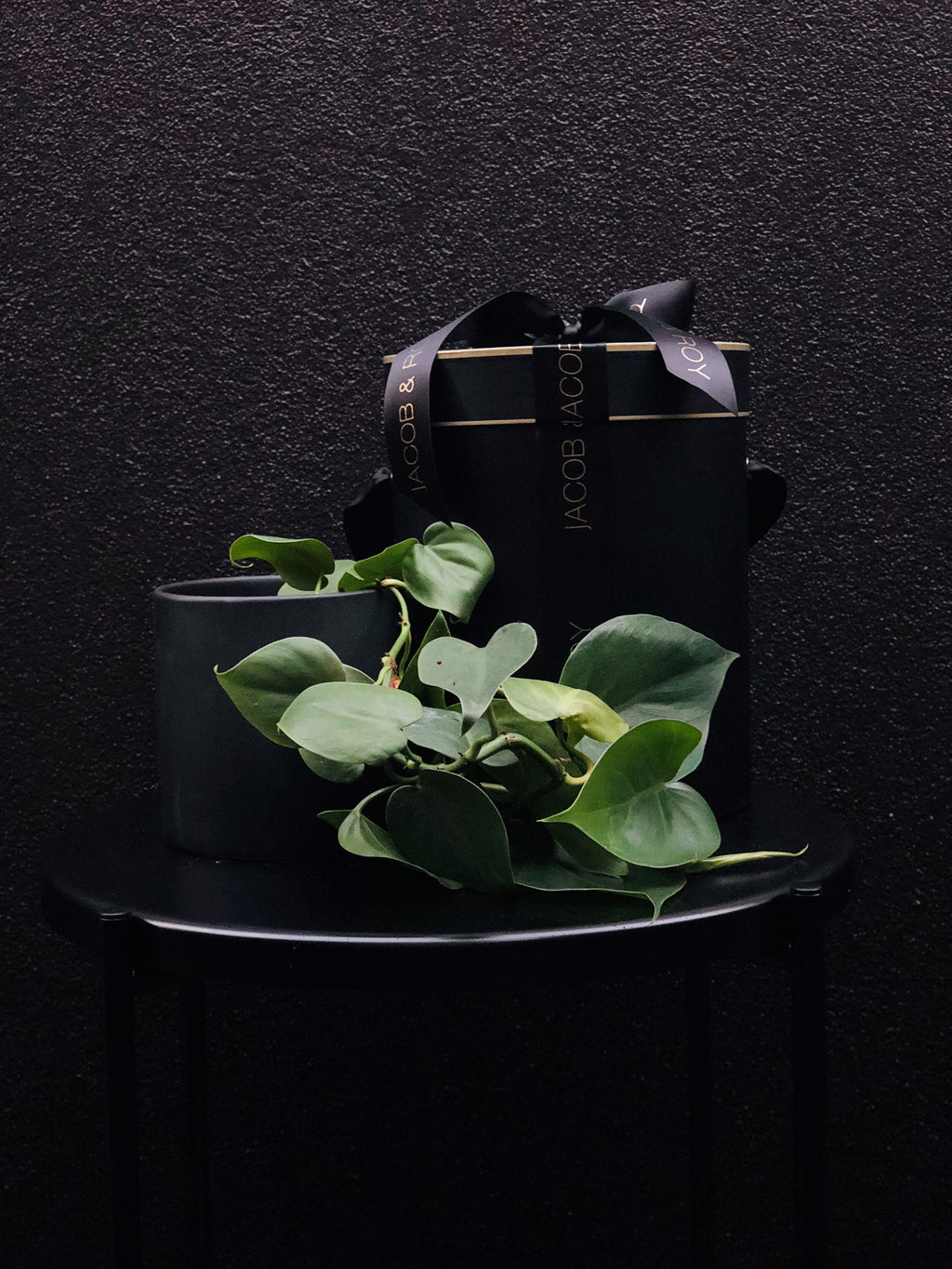 Sweet Heart Vine in a matte black pot