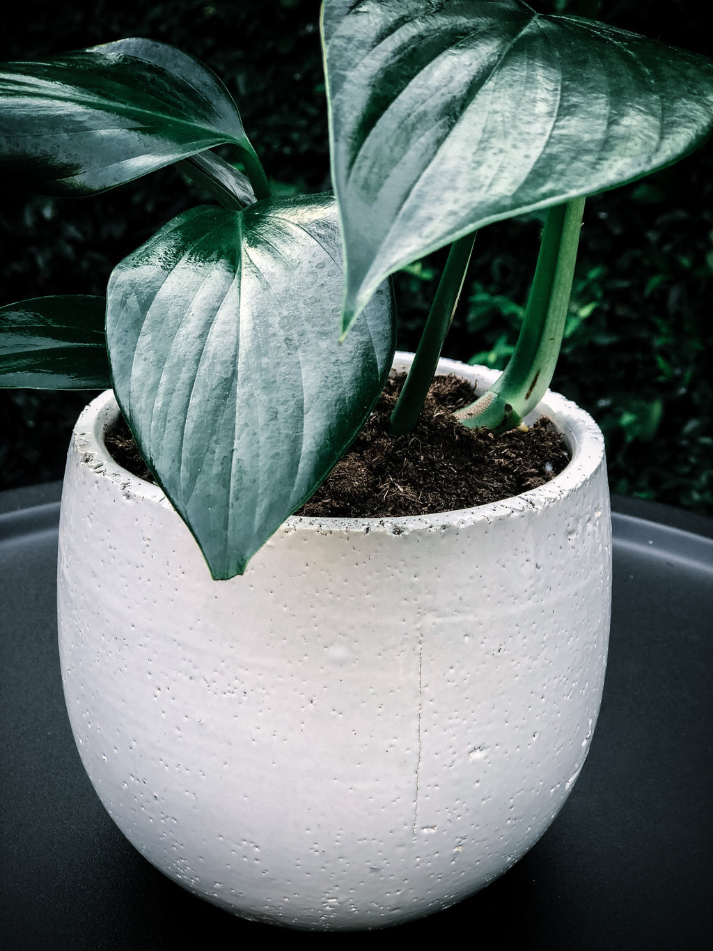 Earthy white pot with various plant options - Jacob & Roy
