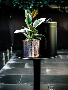 Tineke Ficus in a rose gold ceramic pot
