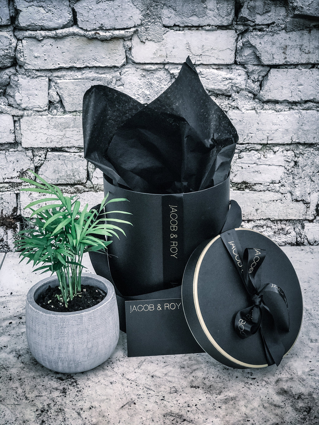 Current stock is large- Lush Parlour Palm in matte black or white pot