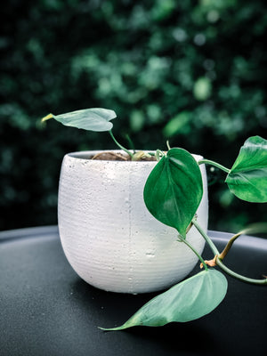Earthy white pot with various plant options