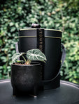 Luxe raised pot with various plant options