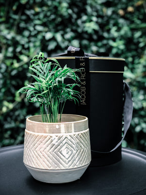 Pearl coloured hand crafted planter from Denmark with various plant options (Delivery within 20km of Melbourne CBD only)