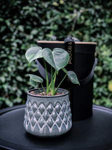 Scandi Style Stoneware Pot with Plant Options - Indoor Plant & Gifts Delivery Australia