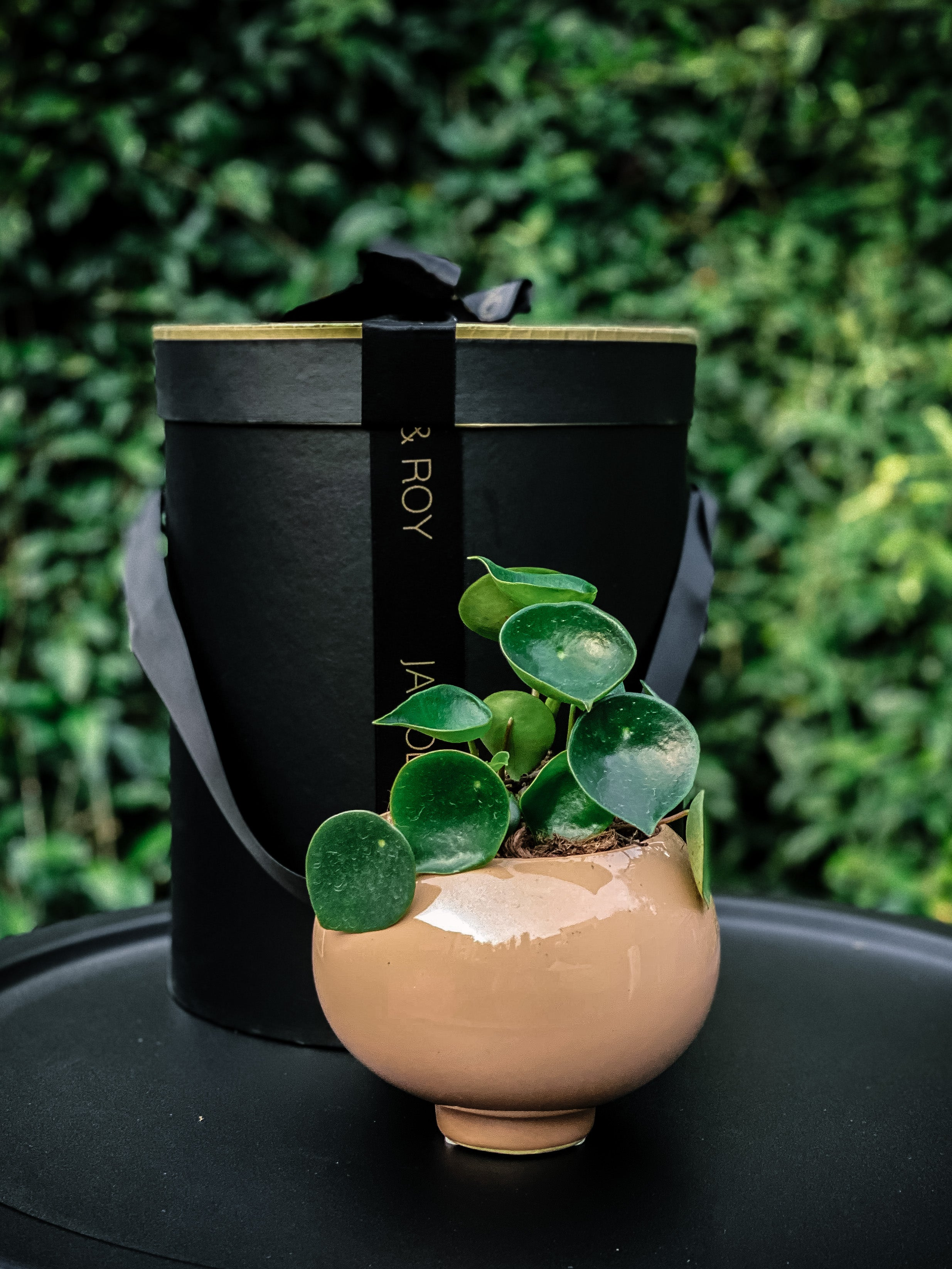 NEW Taupe handcrafted stoneware pot with Raindrop Peperomia - Jacob & Roy