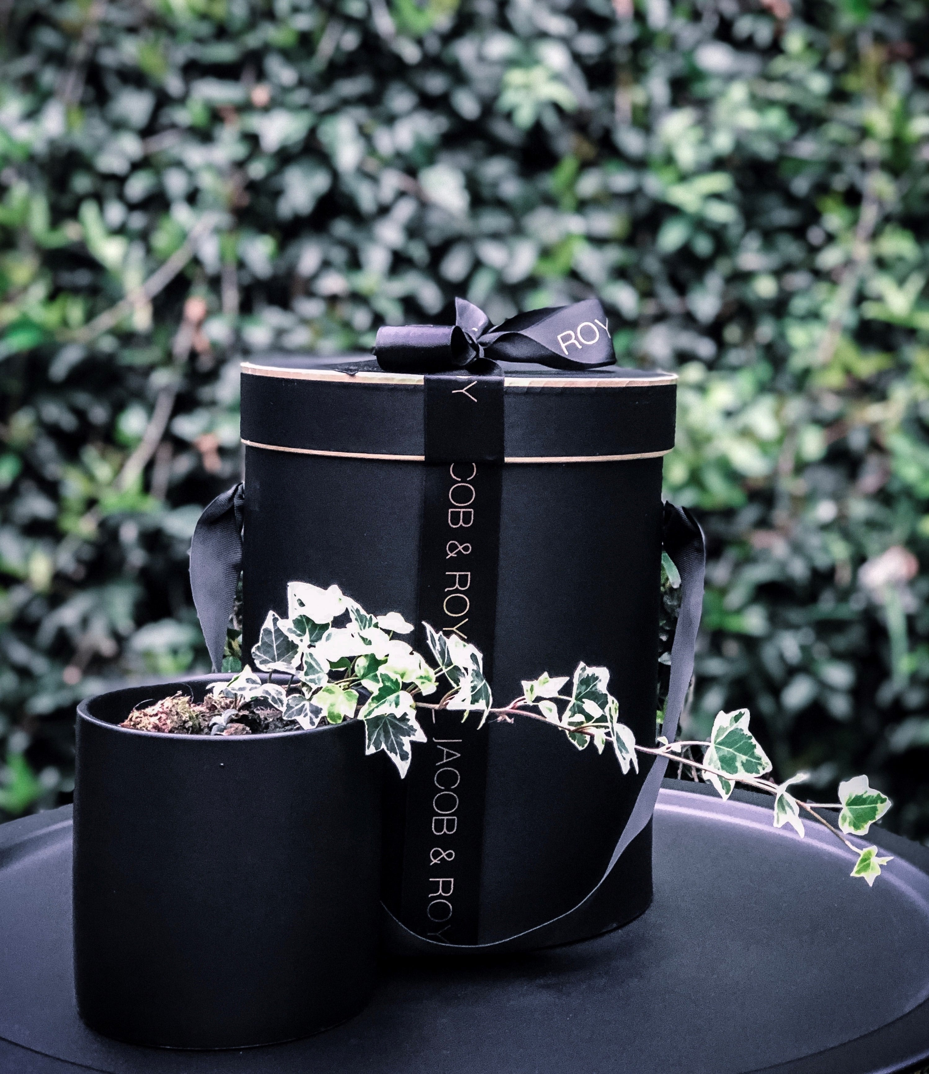 Ivy in a matte black pot - Indoor Plant & Gifts Delivery Australia