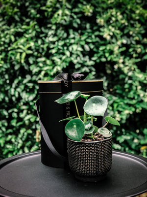 Modern patterned pot with various plant options