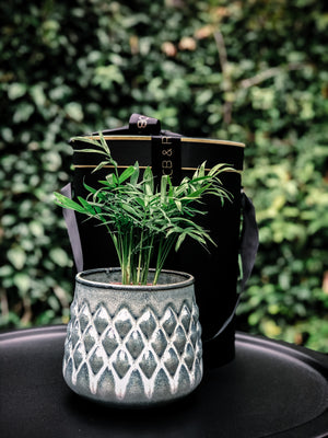 Scandi diamond pattern stoneware pot with various plant options