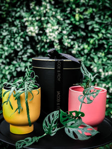 NEW- Vogue planter with various plant options (Perfect for Valentine's Day)