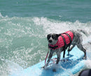 Surf City Life Jacket - For Dogs! - STEM of LIFE