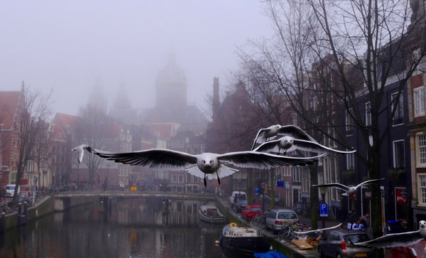 Seagull of Amsterdam 2