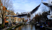 Seagull of Amsterdam 7