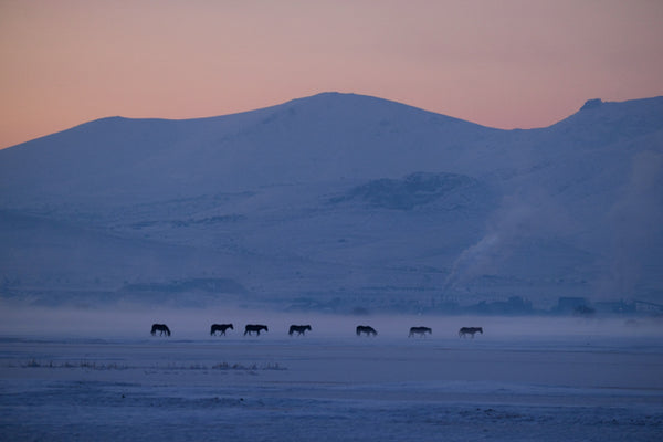 Mist and Horses
