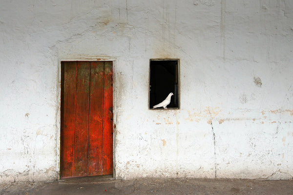 Red Door White Dove