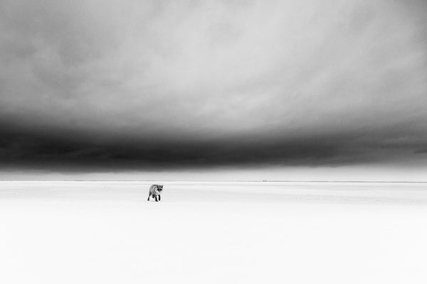 White desert under a stormy sky