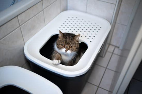 The Best Way to Get Rid of Cat Litter Smell