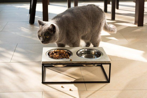 How Long Can Cats Go Without Eating And Driking?