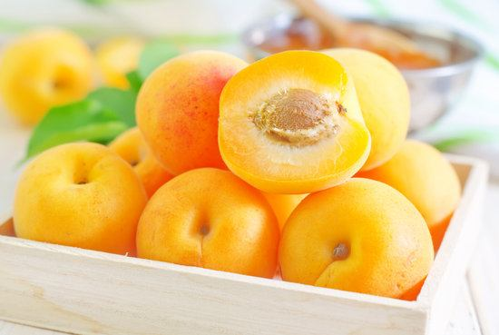 Can my cat eat apricot?