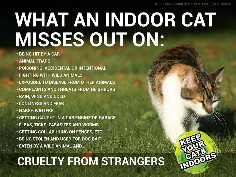 14 Things Explain Why You Should Keep Your Cat Indoors