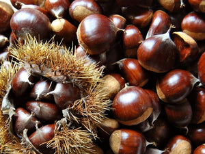 California Chestnuts