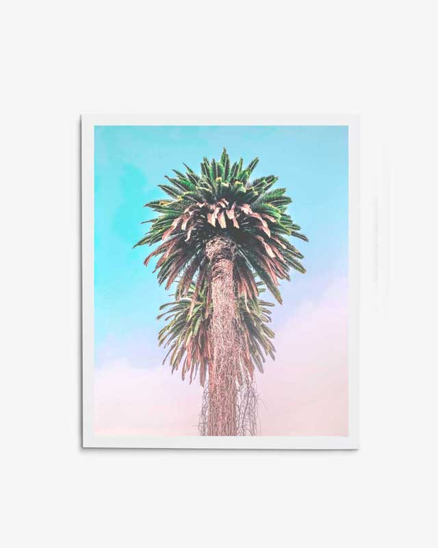 Royal Palms Art Print