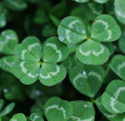 Eco-Friendly Items and Recipes to Celebrate St Patrick's Day