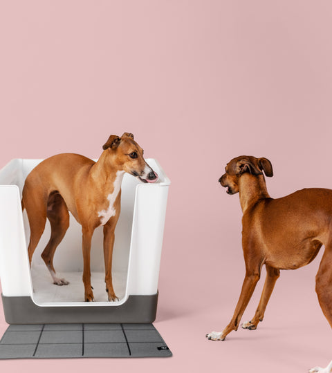 Do you need more than 1 Doggy Bathroom?